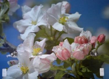 bloem 18